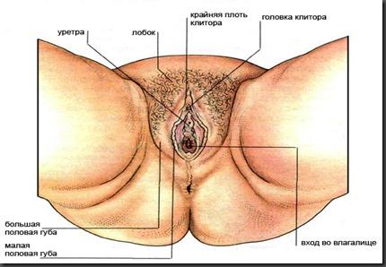 увеличивается ли размер влагалища от количества секса-йл3
