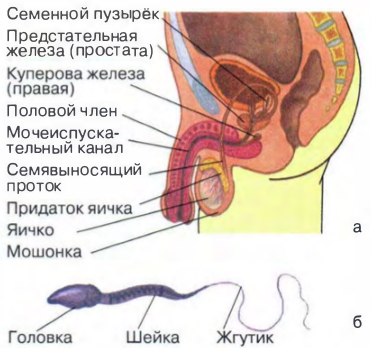 Порно фото половых органов во время секса