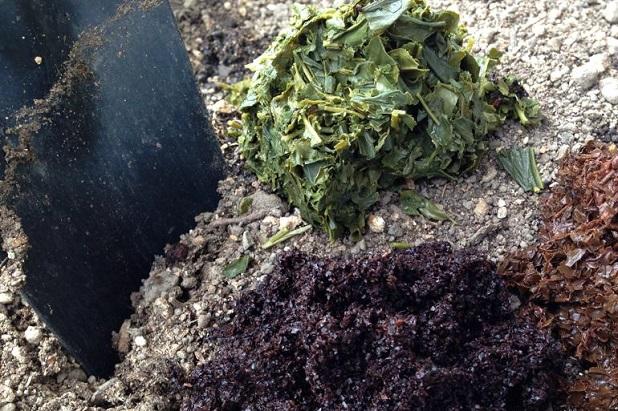 какие чаи пить для похудения на травах