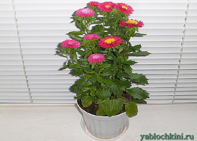 Какие цветы можно выращивать дома в горшках