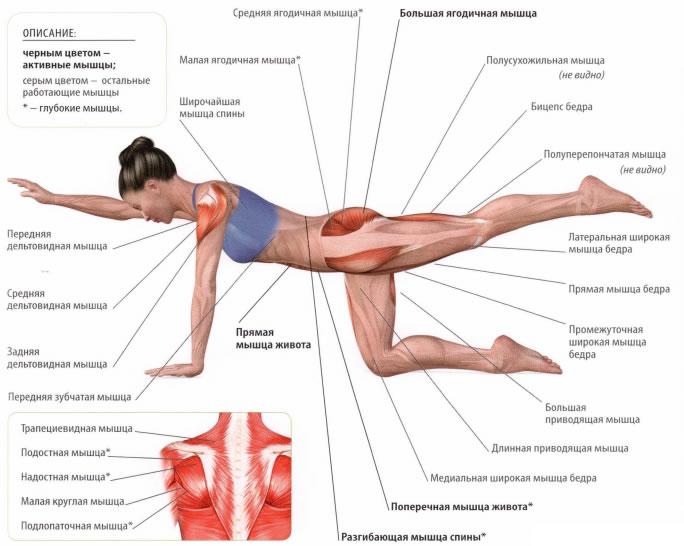 Ягодичные мышцы + отводящие мышцы бедра! подчеркиваем линию ягодичной мышцы!