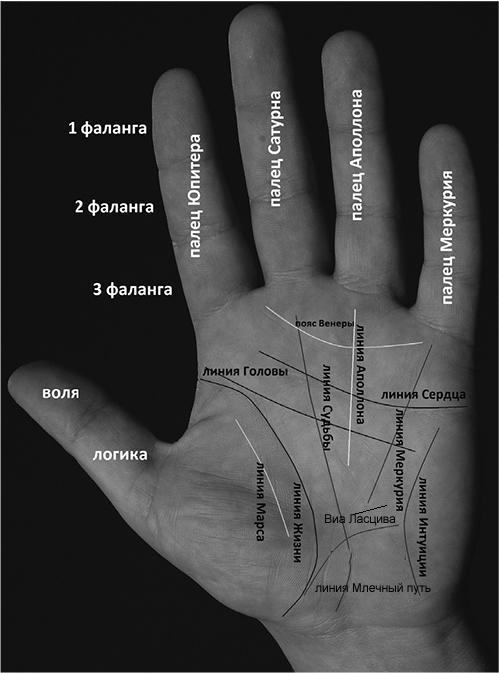 Линии рук с картинками