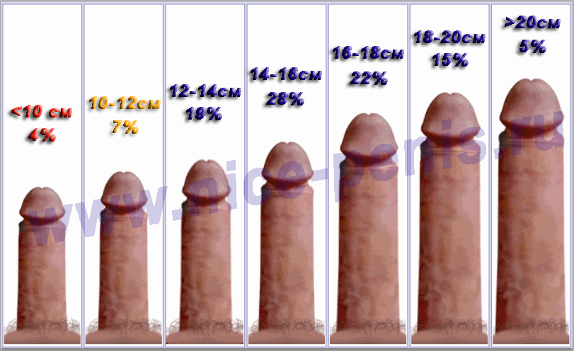 Секс размер члена