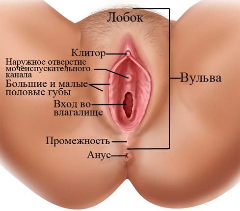 vospalyaetsya-mezhdu-vlagalishem-i-zadnim-prohodom
